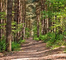 Summer forest by AttiPhotography