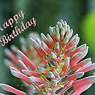 Pink Happy Birthday by June Holbrook