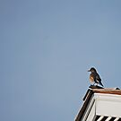 Peak...Beak....Bird by Sunshinesmile83
