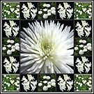 White Flowers Collage featuring Dahlia by BlueMoonRose