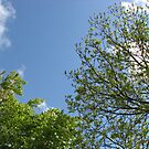 Blue Sky and Green Leaves by BlueMoonRose