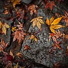 Autumn by Alistair Wilson