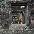 Ruinous Dogs by Gillian Berry