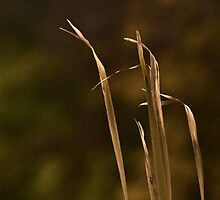 Rustic Reeds by sundawg7