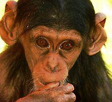 Young Chimp by Alexa Pereira