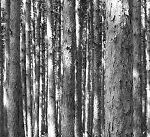 Thick Woods by David Piszczek