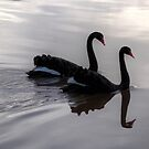 Mirroring Black Swans  by CezB