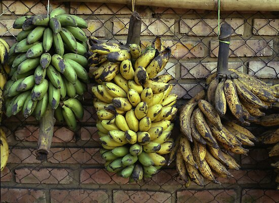 Colombian Platanos by Larry3