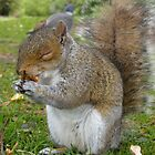Chester Park Squirrel by Harri