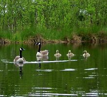 A Lovely Geese Family by ienemien