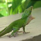 Anole Lizard Behavior by JeffeeArt4u