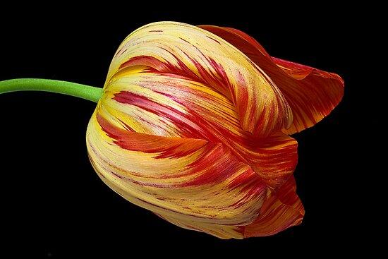 Fiery Belle by Leslie Nicole