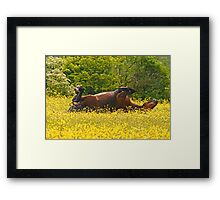The Sun Worshipper Framed Print