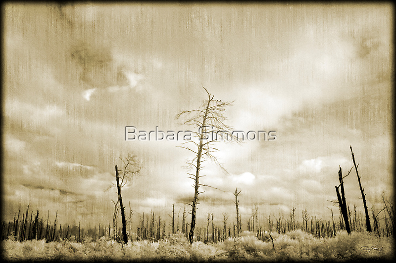 """""""Wildfires - I"""" by Barbara Simmons"""