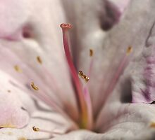 Sweet Dimples by Joy Watson