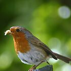 robin red breast by Éilis  Finnerty Warren