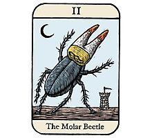 The Molar Beetle Photographic Print