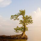 Lone tree. Bunche Beach, Florida. by JeansViews