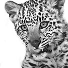Snow Leopard Kitten Black and White by Anne McKinnell