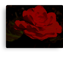 Begonia...... Bewitched, Bothered and Bewildered Canvas Print