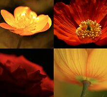 Red/Yellow by Paul Revans