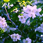 Blossoms 1 by Barry W  King