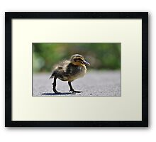 Chick on the war path Framed Print