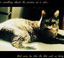 the company of a cat, is sometimes better then a friends. by winterwonderz