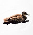 duck by gary roberts