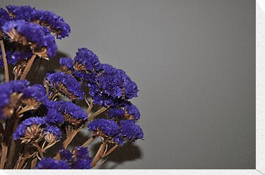 dried flowers by gary roberts