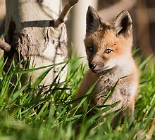 Fox Kit by Jay Ryser