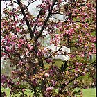 Blossoming Crabapple by lovinffhmusic
