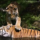 Don't Move Mum! by Alannah Hawker