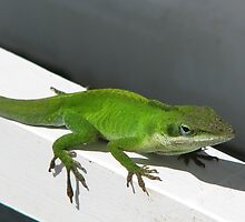 Anolis Carolinensis Lizard Habitat in TN- Male by JeffeeArt4u