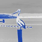 Pelican Post by Virginiad