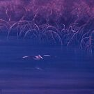 Mangrove Pelican by Cary McAulay