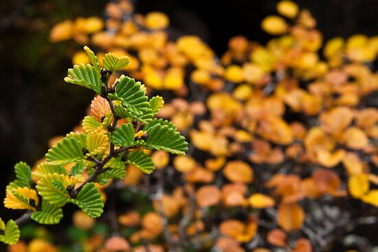 Fagus turning by Will Hore-Lacy