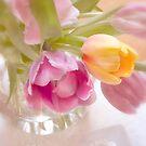 Tulip Faces   by SandraRos