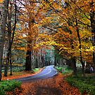Copper Beech road by Robyn Lakeman