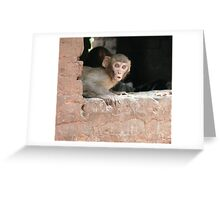 Scared monkey Greeting Card
