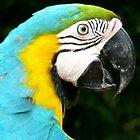 Blue and Yellow Macaw by MelanieBKK