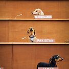 Pakistan speaks out at the Dachshund U.N by Stephen Colquitt