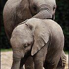 African Elephant 02 by Alannah Hawker