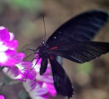 Pink Butter II by Darren Bailey LRPS