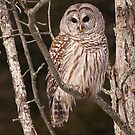 At Home With a Barred Owl by Gary Fairhead
