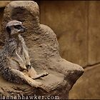 Meerkat 02 by Alannah Hawker