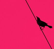 bird on a wire by patticake