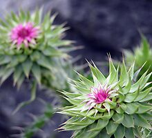 Unknown Flower 2 by Krystal Iaeger