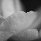 Silvertone Petals by Sonja Wells