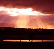 Golden Merlot Skies over Lovedale by Jen Waltmon